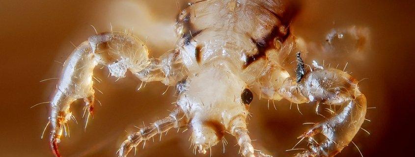 LCA San Antonio New Year New Super Lice Problem